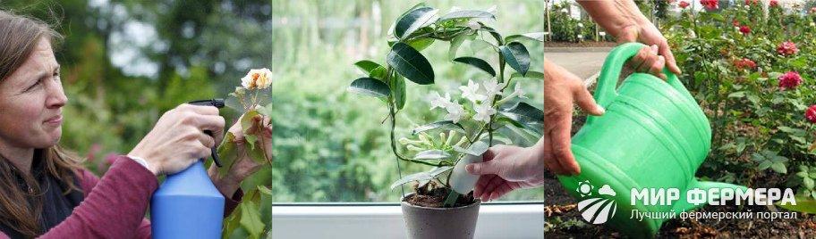 Древесная зола для цветов