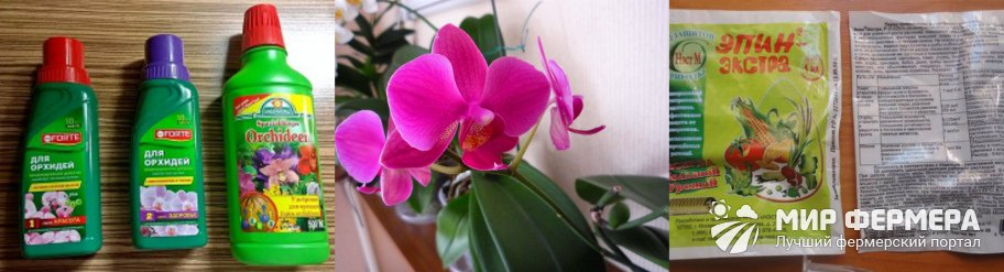 Какое удобрение для орхидей лучше