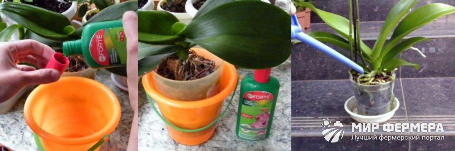 Корневая подкормка орхидей
