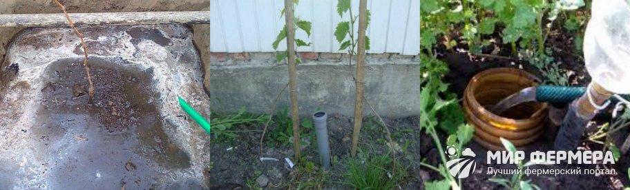 Дренажный полив винограда