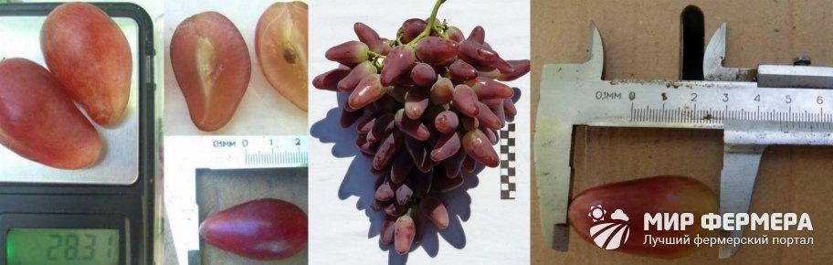 Виноград Дубовский розовый плюсы и минусы