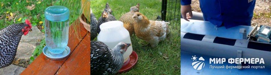 Какой должна быть поилка для кур и цыплят