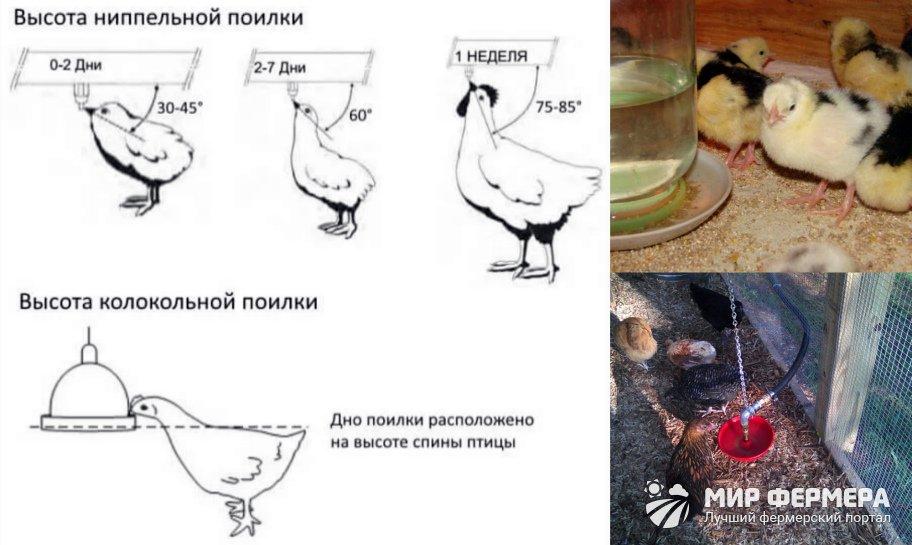 Установка поилок для кур
