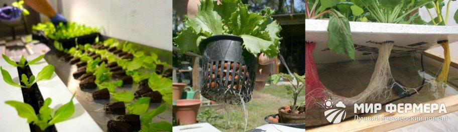 Как выращивать овощи на гидропонике