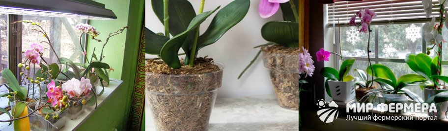 Как поливать орхидею зимой