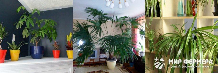 Виды тенелюбивых комнатных растений