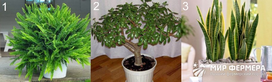 Декоративно-лиственные растения для дома
