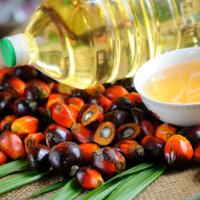 Пальмовое масло могут сертифицировать