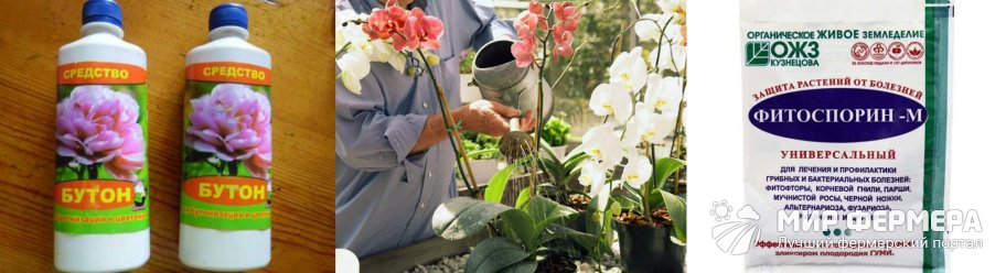 Чем можно поливать орхидею