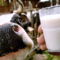 Россельхознадзор будет контролировать уровень жира и белка в молоке