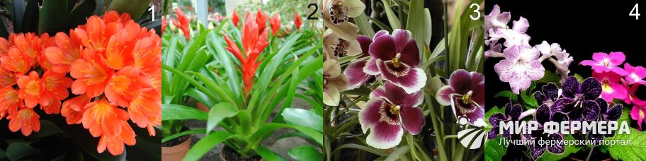 Теневыносливые цветущие растения