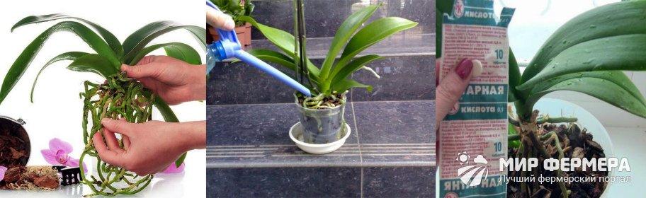Янтарная кислота для комнатных цветов