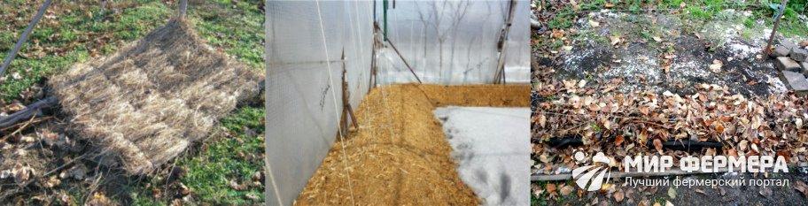 Выращивание винограда на Урале