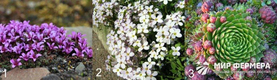 Покровные растения для альпийской горки