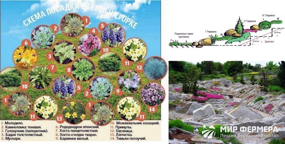 Схема размещения растений на альпийской горке