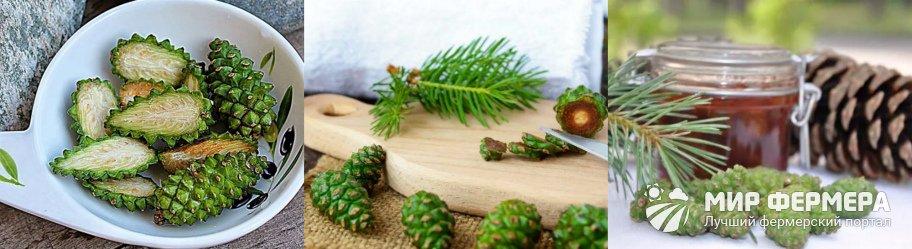 Варенье из сосновых шишек без варки