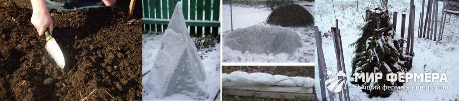 Подготовка магнолии к зиме
