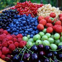 Краудфандинговый проект «Возрождение ягодного производства»