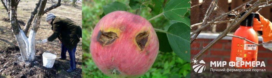 Профилактика болезней яблонь