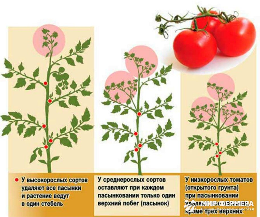 Пасынкование томатов в теплице и открытом грунте