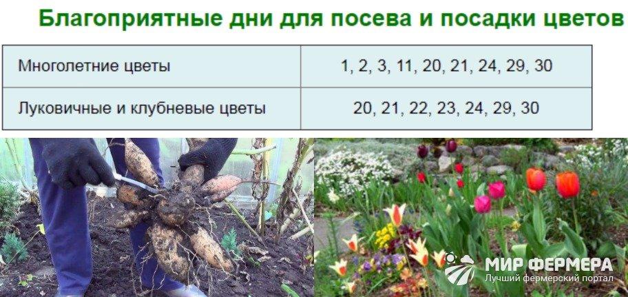 Посадка цветов в ноябре