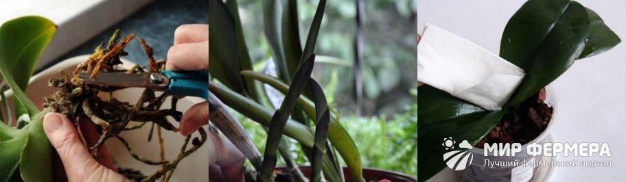 Профилактика болезней орхидей