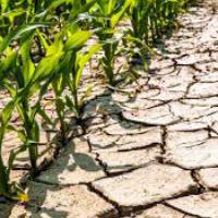 Управление сельскохозяйственными культурами от стартапа FieldIn