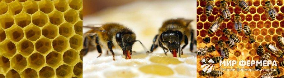 Производство меда пчелами
