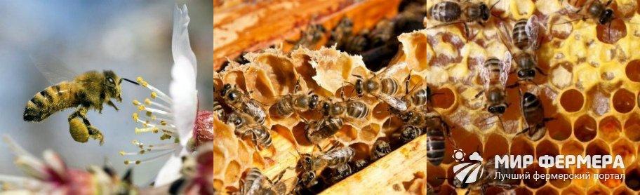 Для чего пчелам мед