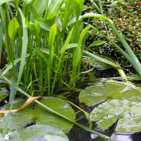 Болотные растения беларуси