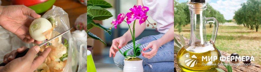 Народные средства против вредителей орхидей