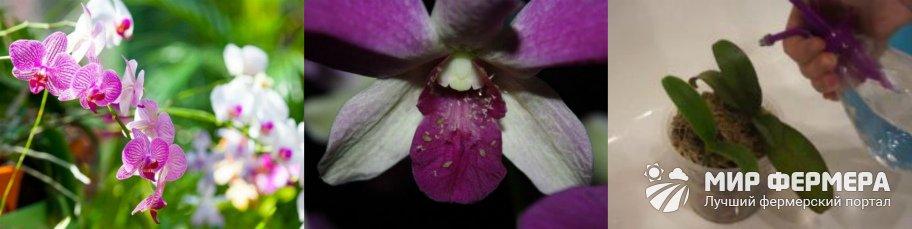 Профилактика вредителей орхидей