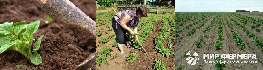 Как окучивать картошку