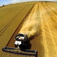 Агрохолдинги – главная проблема сельского хозяйства