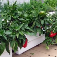 Краудфандинг Urbanatura – инновационная система выращивания продуктов питания