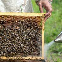 Минсельхоз создает единый реестр пчеловодов