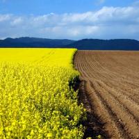 Банкам разрешат предлагать инвесторам аграрные земли на Дальнем Востоке