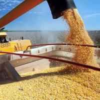 Квоту на экспорт зерна могут ввести на постоянной основе