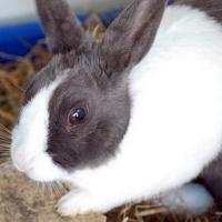 Бывают ли у кроликов блохи