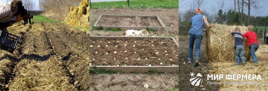 Посадка картошки под солому пошагово