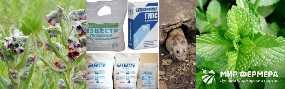 Народные методы борьбы с крысами