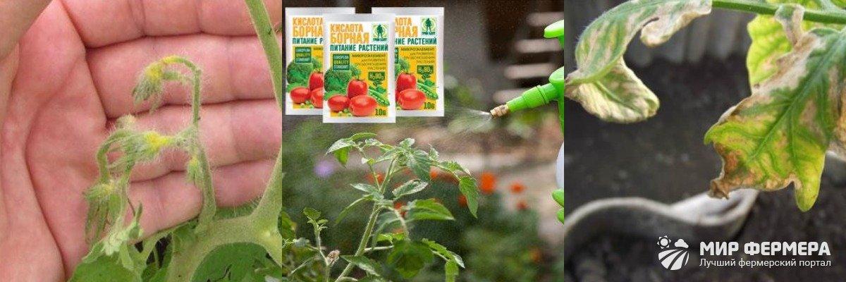 Польза борной кислоты для помидор