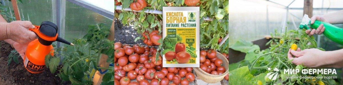 Сроки внесения подкормок для помидор