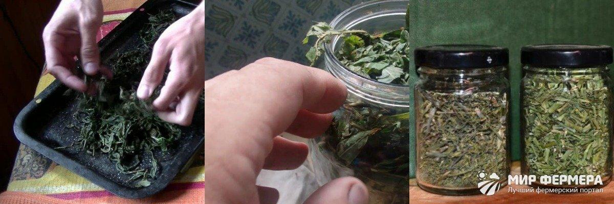 Ферментация Иван-чая в банках