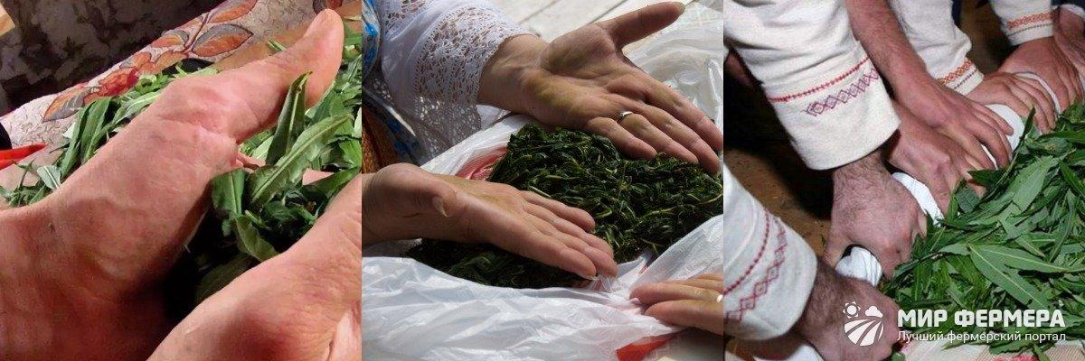 Ферментация Иван-чая в полотенце