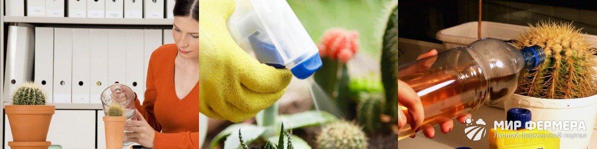 Способы полива кактусов
