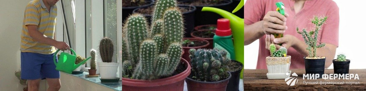 Частота полива кактусов
