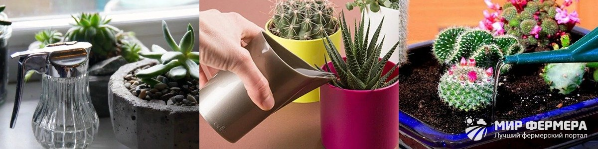 Вода для полива кактусов