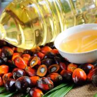 В России ужесточают требования к составу пальмового масла