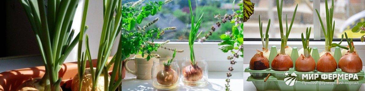 Освещение для выращивания лука
